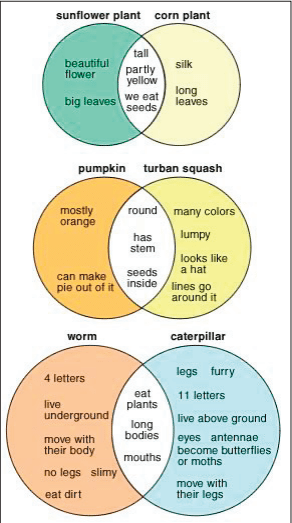 venn diagrams, suflower plant : corn plant, pumpkin : turban squash, worm : caterpillar