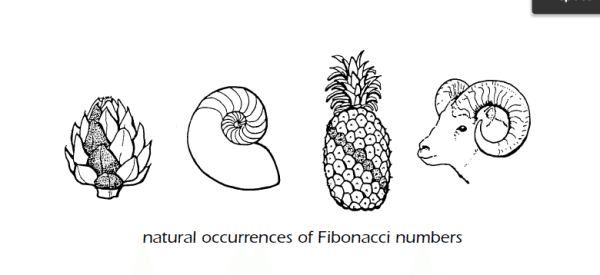 fibonacci numbers in nature, Math Matters by Suzanne H. Chapin and Art Johnson