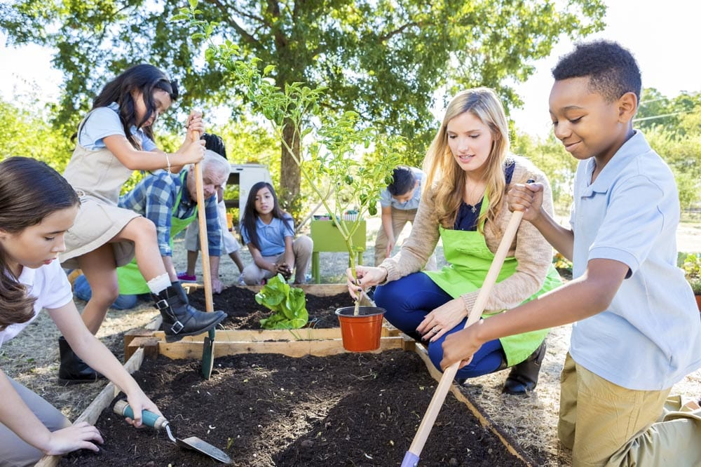 Diverse group of elementary school students are digging in soil in vegetable garden, and planting plants. Students are learning about plant life during field trip at farm. They are wearing school uniforms and using gardening tools.